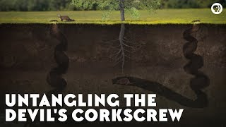 Untangling the Devil's Corkscrew