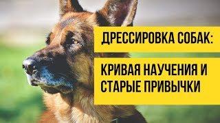 Дрессировка собак. Кривая научения и старые привычки