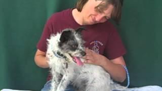 Fea A4526442 Cairn Terrier Mix