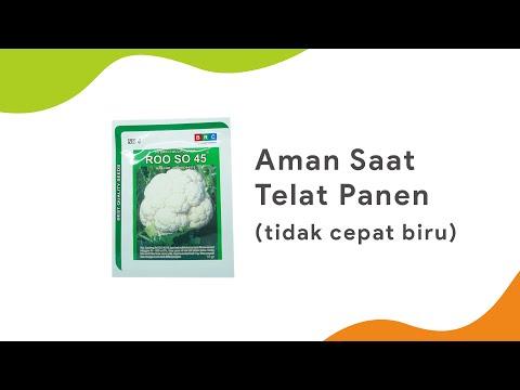 TAHAN BIRU BUNGA, AMAN SAAT PANEN | Benih Kembang Kol Roo So 45 BRC Rooso | Toko Deeres
