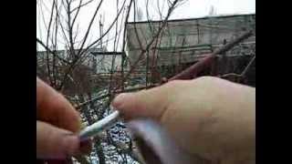 Персик по Луговому из двух палочек зимой? от ЛисСад(экспериментальная прививка персика на карликовый подвой пумесиллект, особенностью данного метода являетс..., 2014-01-04T12:23:55.000Z)