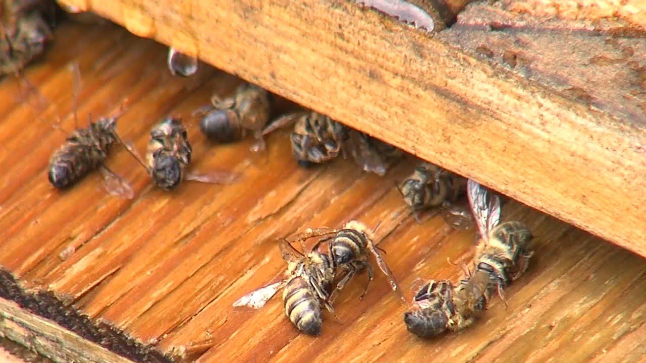 Beekeeper Mosquito Spray Killed Honeybees
