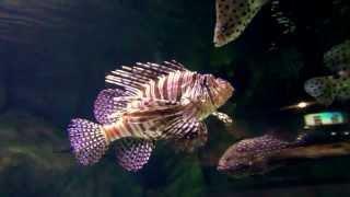 Aquarium Ideas - Planted Aquariums New Hd Best Planted Aquariums