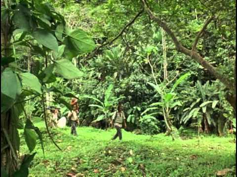 Trailer do filme O Mistério da Libélula