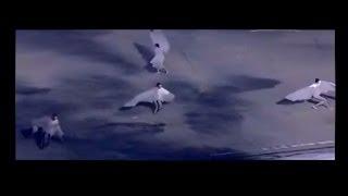 韓国 平昌PRでブーメラン キム・ヨナ銀に怒りソトニコワを「蛍光色の蛾」と嘲るも・・・ ソトニコワ 検索動画 14
