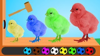 Learn Colors with Baby Chicken Wooden Hammer Soccer Balls Finger Family Song Nursery Rhymes