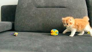 Рыжий кот !!!