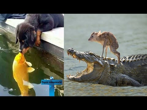 Top 12 Unbelievable Animals Who Adopted Other Animals - Adorable Animals Friendship