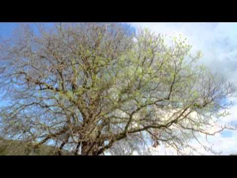 Moby - Love Of Strings 2013 (HD)