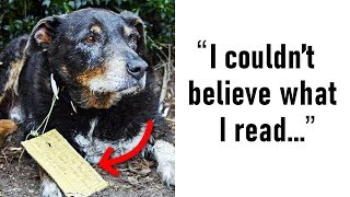 woman-had-no-clue-her-dog-was-a-hero-until-she-found-a-note-on-his-collar
