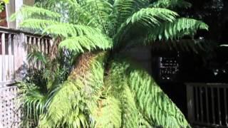 Canadian Gardening in Zone 8b/9a