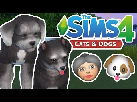 Elderly Pets | The Sims 4 YouTuber Pets | Episode 10