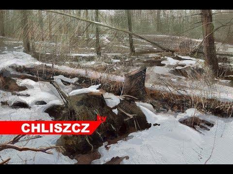 Photoshop CC  digital painting – fellen trees