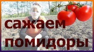 Как посадить правильно помидоры. Помидоры посадка рассада выращивание уход. Как вырастить помидоры.(Как посадить правильно помидоры. Помидоры посадка рассада выращивание уход. Как вырастить помидоры. Подпис..., 2016-05-07T18:18:06.000Z)