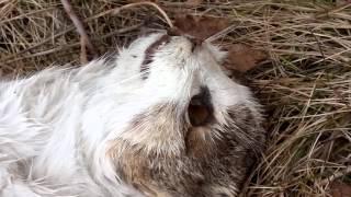 Мертвая кошка.😭