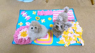 A Toy Poodle and  a puppy are overjoyed with the large amount of gifts from Daddy lol