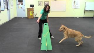 Super Duper Flyball Training Video