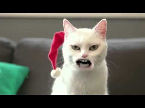Cat sing Jingle bells ☻