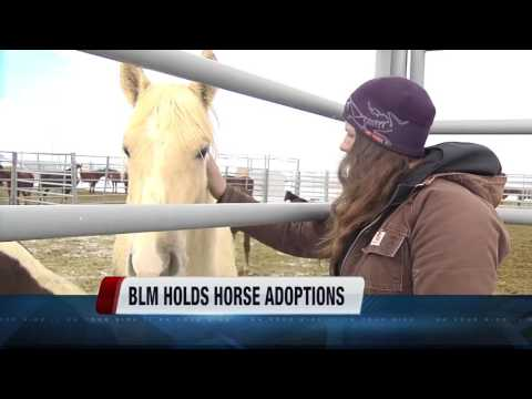 Bureau of Land Management continues wild horse adoptions south of Boise