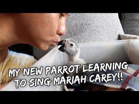 MY BABY PARROT SINGS MARIAH CAREY!  Vlog 222
