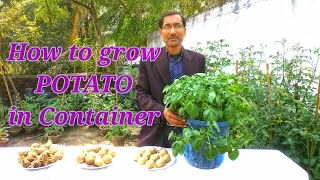 Grow Potatoes easily in container at your home.