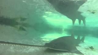 Saw shark up close at the Atlantis resort