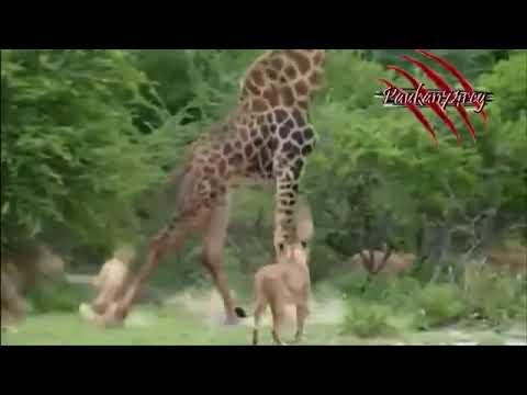 олами хайвонот мир животнйы