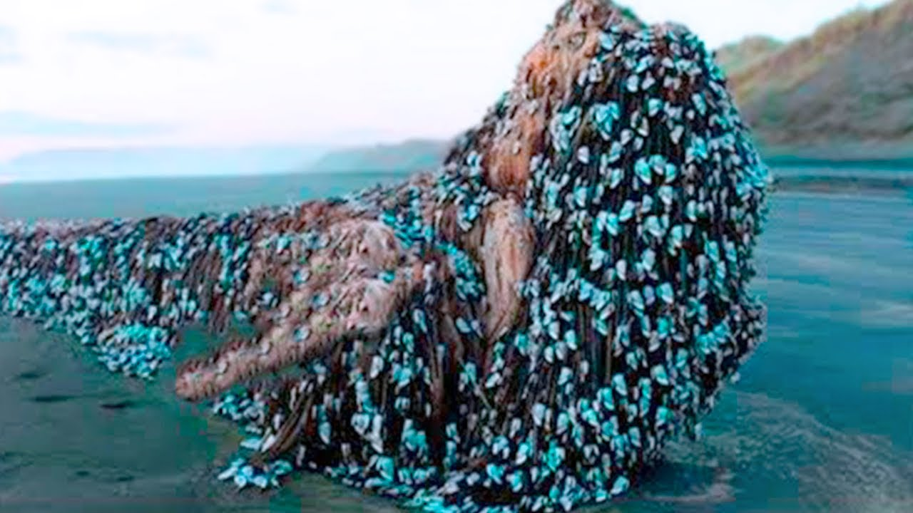 15 Most Unexplained Things Found in the Middle of the Ocean