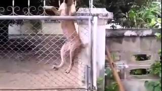 a-fence-cannot-keep-these-friends-apart