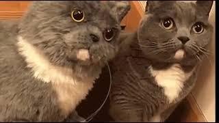 Cat-ception