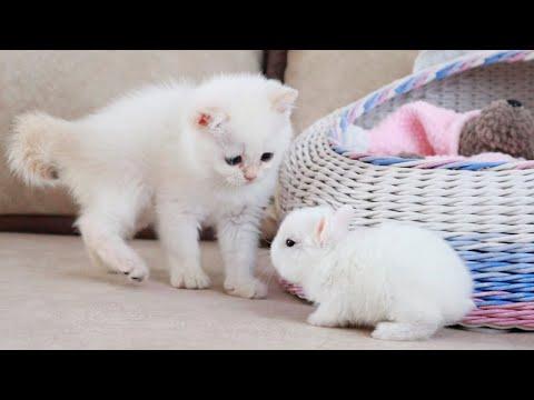 White kitten and white tiny bunnies  | It's so Сute!