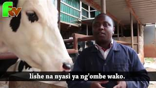 Dairy Farming techniques- Ngigi Farm.