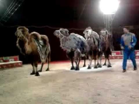 Animali vari al circo