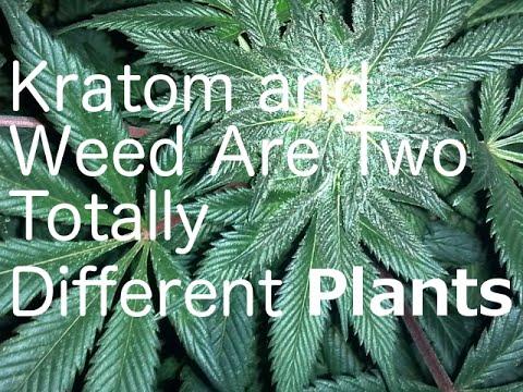 Kratom And Weed Online