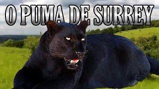 70 - O Puma de Surrey