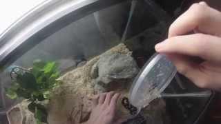 Unboxing mosaic california king snake