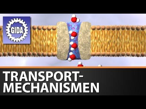 GIDA - Transportmechanismen - Biologie - Schulfilm - DVD (Trailer ...