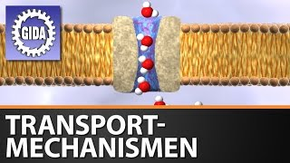 GIDA - Transportmechanismen - Biologie - Schulfilm - DVD (Trailer)