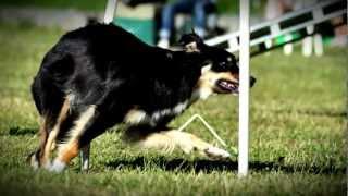 Dog Agility [hd]