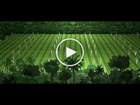 DEŠTNÉ PRALESY - Krátké video z dokumentu Cowspiracy