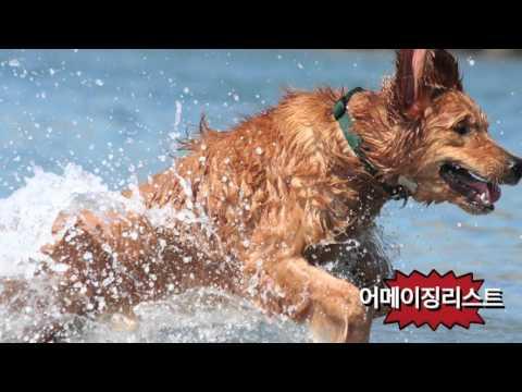 Smart dogs in the world top 10 (세상에서 가장 똑똑한 개)top10