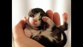 手のひらサイズの動物(猫、犬、ハムスター、うさぎetc)たちがかわいく...
