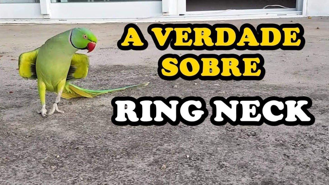 RING NECK FICA MANSO? GRITA MUITO ? - UDP