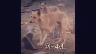 140.محشش ذا الانسان ههههههههههههههههه 😂😂😂 - YouTube.mp4