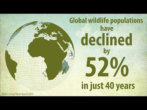 Living Planet Report: Global Wildlife Populations Halve in 40 Years
