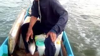 Video Hasil  mancing kulub di Sei Banjar-Nunukan download MP3, 3GP, MP4, WEBM, AVI, FLV Agustus 2018