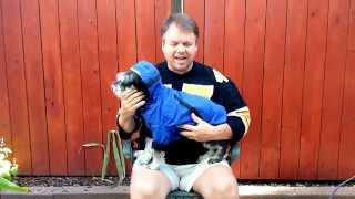 Miniature Schnauzer And Owner Take Als Ice Bucket Challenge.