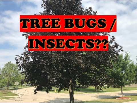 Best Fertilizer For Trees Bayer Fertilizer Tree Shrub Protect Curb Appeal Youtube
