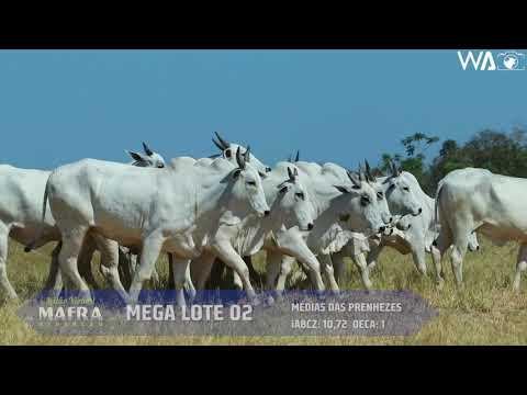LOTE 51   MEGA LOTE 02