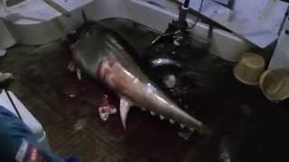 Экстремальная рыбалка. Большая рыба ожила в лодке(Экстремальная рыбалка. Мертвая рыба ожила в лодке. Успокоил большую рыбу бейсбольной битой! Бейсбольной..., 2015-07-08T08:13:58.000Z)
